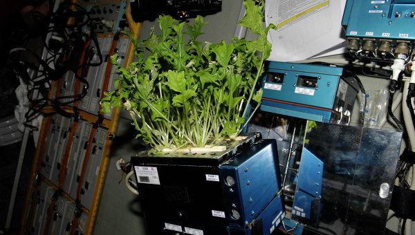 В следующем году космонавты на МКС будут выращивать болгарский перец и помидоры
