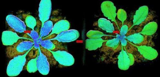 Протестирован прибор, который измерит свечение растений из космоса