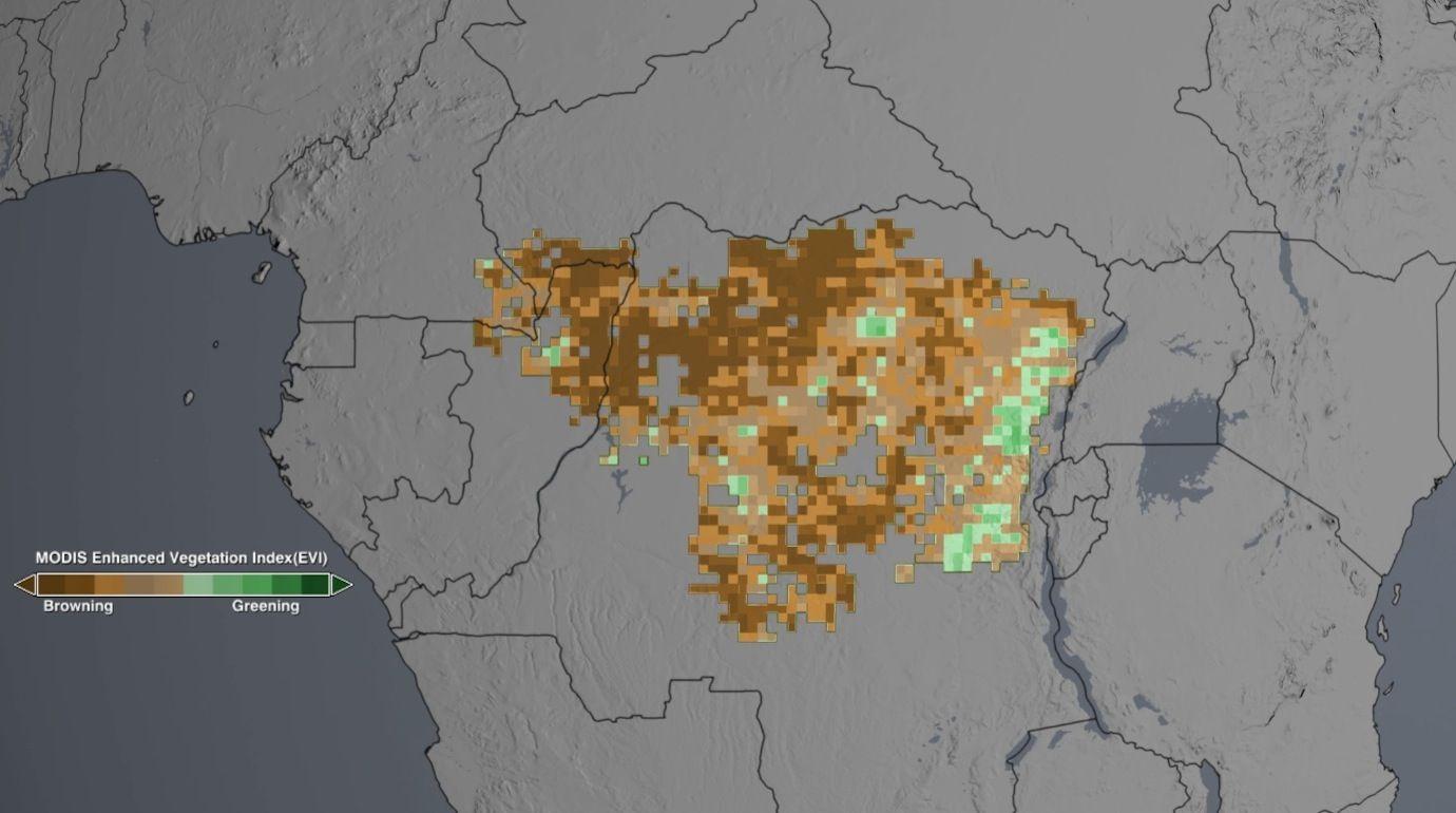 Спутники помогают следить за состоянием тропических лесов