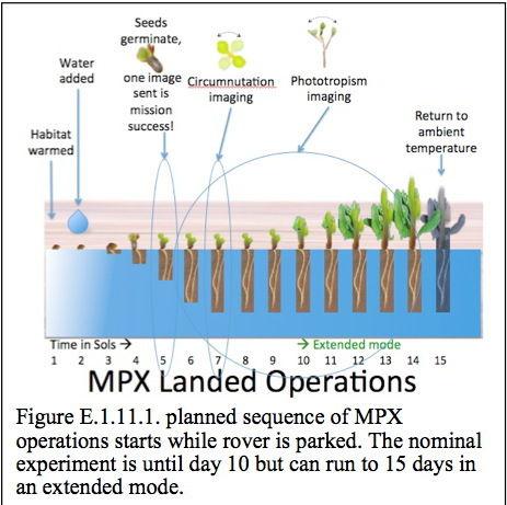 Ученые предложили провести эксперимент по выращиванию растений на Марсе