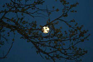 Влияет ли Луна на наш сон? Ученые говорят, что нет
