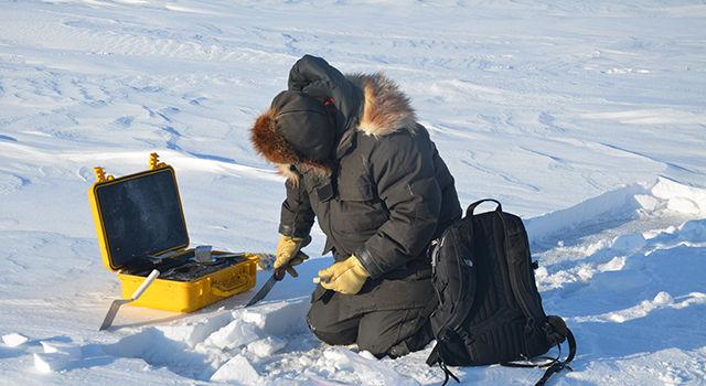 Снежный покров на льдах Арктического моря стал тоньше на 30-50 процентов